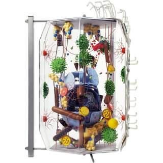 Glascellen 40,000 gånger förstoring av mänskliga celler