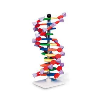 DNA modell - 12 lager