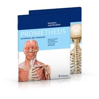 Muskuloskeletala systemet - 2 affischer