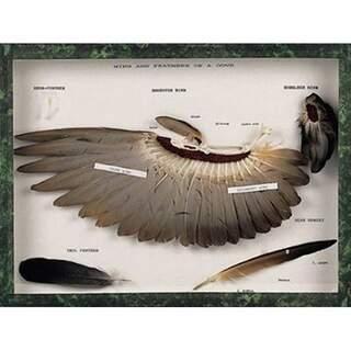 Vingar och fjädrar av en duva (Columba palumbus)