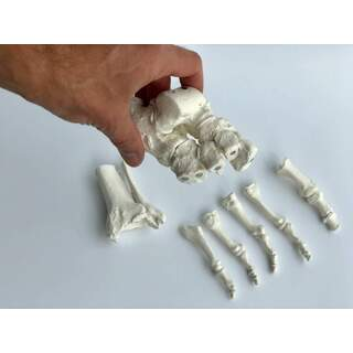 Fotskelett som sätts ihop med magneter