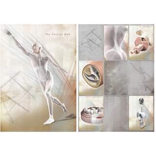 Fascia plansch poster 60x85 engelsk lamineret