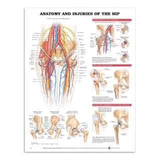 Poster - Anatomi & skador i höftleden på engelsk