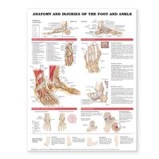 Anatomi & skador i fot & ankelled laminerad affisch engelsk