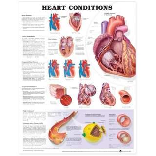 Hjärtsjukdom (Heart Conditions) laminerat affisch