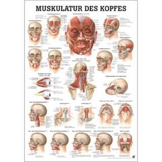 Huvudets muskulatur tysk/ren latin