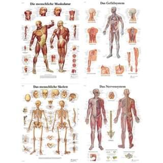 Affischpaket - Anatomi