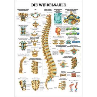 Laminerad plansch med ryggradens anatomi och skador tyska & latin