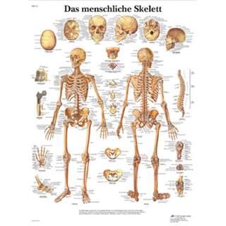 Skelettet affisch ren latin 51x67 cm