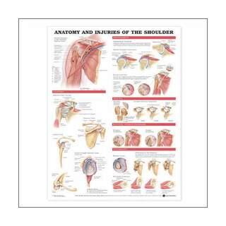 Affisch - Anatomi & skador i axelleden laminerad affisch 51x66 c