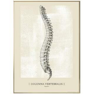 Anatomisk konst plansch - CLASSIC5