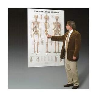 Skelett och ledband laminerad affisch