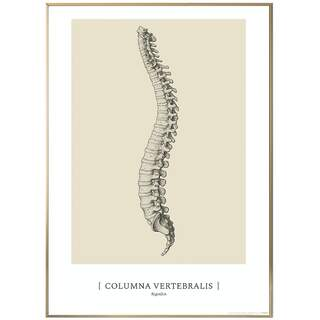 Anatomisk konst plansch - CLASSIC1