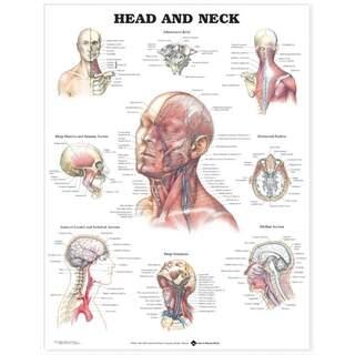 Kraniets muskler, blodkärl & nerver i ansiktet & på halsen engelska