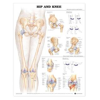 Anatomiplansch - Höft/knä