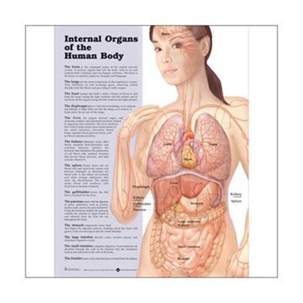 kroppens anatomi organ bild