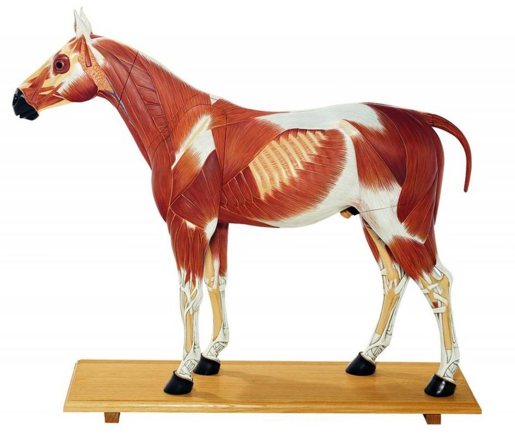 Hästmodeller